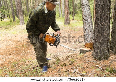 Manufacture of the index of the direction of sanitary felling of wood in the Siberian taiga by a chainsaw. Man cuts tree with chainsaw in forest. #736620817