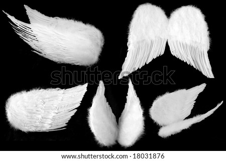 Many Angles of White Guardian Angel Wings Isolated on Black Easily Extracted