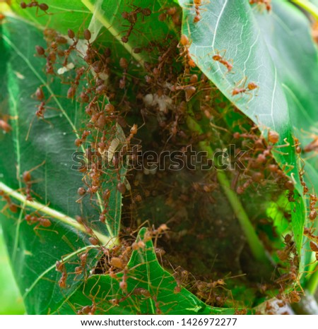 Many ants are helping to build a nest, they have cooperation. #1426972277