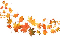 Many autumn leaves moving by gust wind on white background