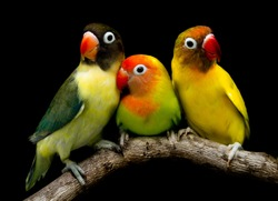 Many beautiful parrots are very cute.