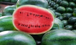 Many big sweet green watermelons and one cut watermelon.Young green watermelon.Watermelon slice.Many big sweet green watermelons and one cut watermelon.