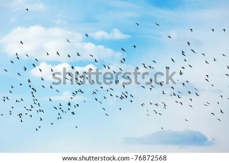 Many birds flying in the sky - stock photo
