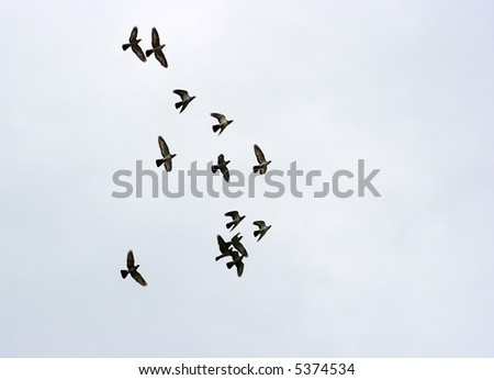 Many birds flying in the sky in a group