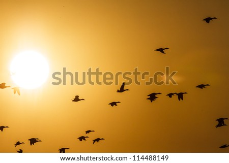 Many birds flying in the sky nature series stock photo