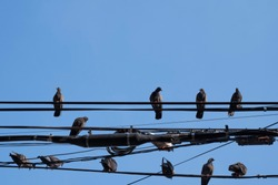 Many birds on the wires have a blue sky as the background.