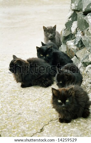 Many black kittens sitting on the ground.