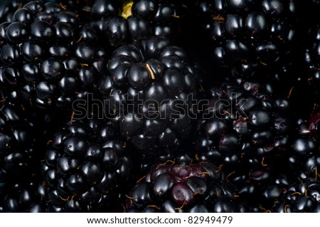 Many blackberries close up