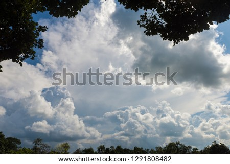 Many branches, branching on the sky for background. #1291808482