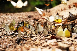 Many butterflies in the forest