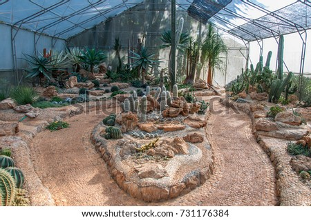 Many cactus in glass house.