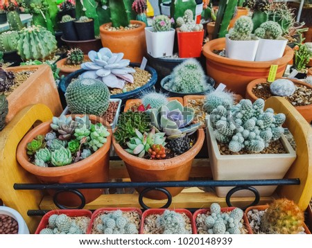 Many cactus plants in the Aquaculture, Cactus is used to decorate the garden Or Placed in the office for beauty.