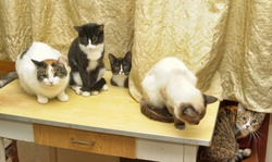 many cats are sitting on a table in the house of an elderly woman