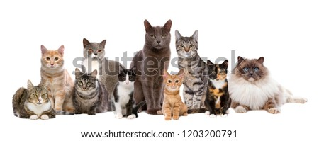 Many Cats sitting in a row, in front of a white background #1203200791