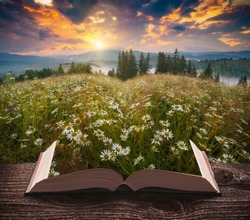 Many chamomile flowers in a mountain valley on the pages of an open magical book. Majestic landscape. Nature concept.