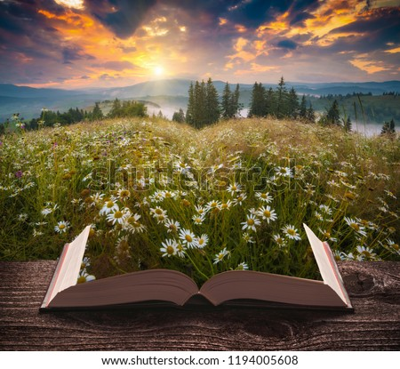 Many chamomile flowers in a mountain valley on the pages of an open magical book. Majestic landscape. Nature concept. #1194005608