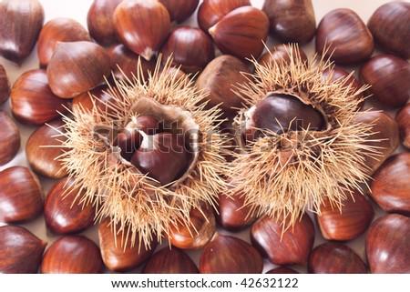 many chestnut burs