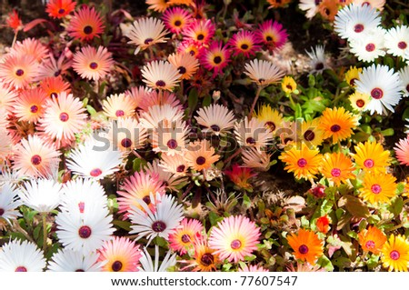 many colorful flower garden