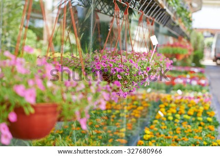 Many colorful flowers in front of a nursery shop for sale