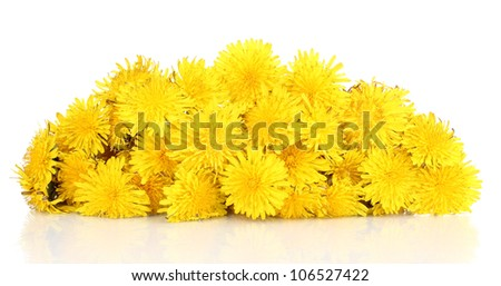 Many dandelion flowers isolated on white