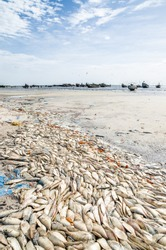 Many dead fish laying on beach with wooden fishing boats in background at Senegalese coast, Palmarin, Sine Saloum Delta