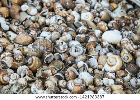 Many dead shells, cherry shells, Fossil shells