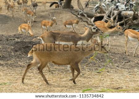 many dear and impala in open zoo #1135734842
