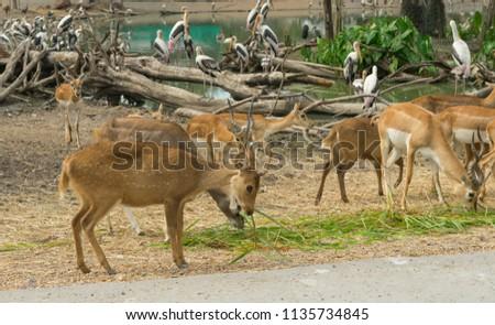 many dear and impala in open zoo #1135734845