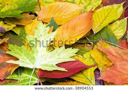 many different autumn leaves as background