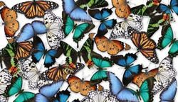Many different bright butterflies on white background