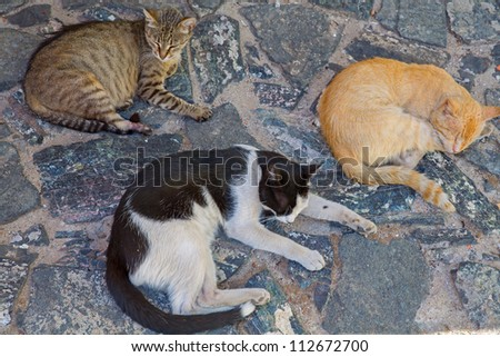 many different street cats stand over antique paving stones