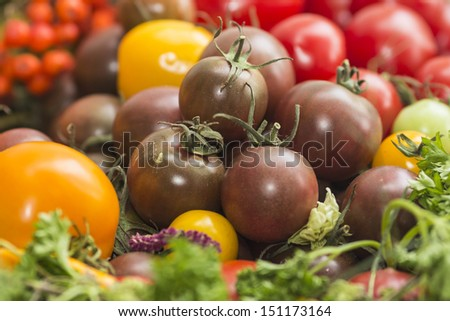 Many different tomato breeds - stock photo