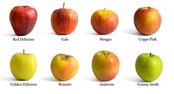 Many different variety apples with name