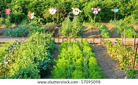 Many different vegetables in the school garden.