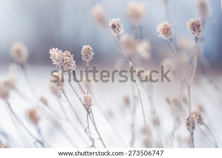 many dry meadow flowers in...