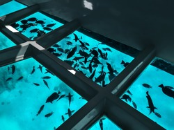 Many fishes silhouettes against the background of turquoise water under a boat with a transparent bottom. Tourist excursion on the bathyscaphe in the Red Sea in Sharm El Sheikh (Egypt)