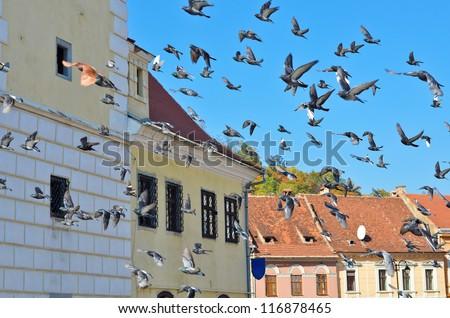 Many flying pigeons on a blue sky