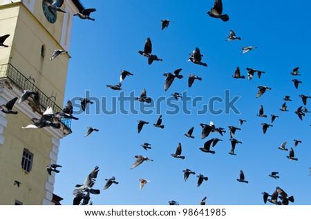 Many flying pigeons on a blue sky - stock photo