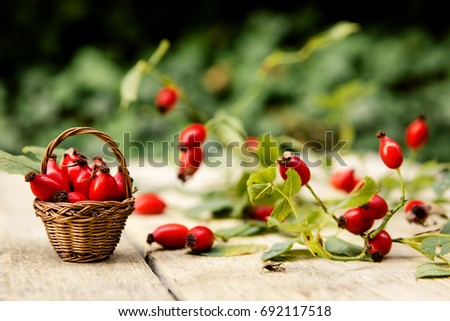 Many fresh rose hips on a table with basket Stock photo ©