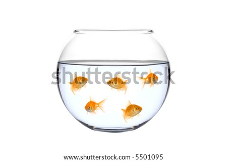 Many golden fish in a bowl against white background