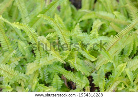 Many green fronds background and texture #1554316268