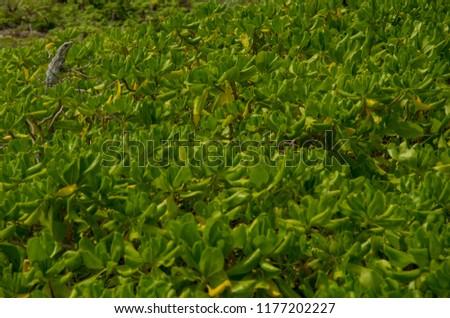 many green plants with an iguana on the top, sunbath #1177202227