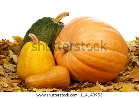 Many halloween pumpkins of different shapes and sizes surrounded by leaves on white background