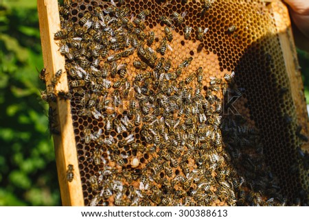 Many hardworking bees on wooden frame of honeycomb, on the garden background, close up