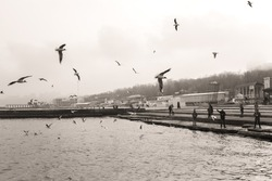 Many hungry seagulls flying in sky over sea water. People walking and standing at spring or winter beach seen in distance.