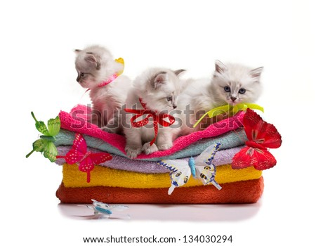 many kittens and colourful  butterflys on stack of colorful towels on isolated on white