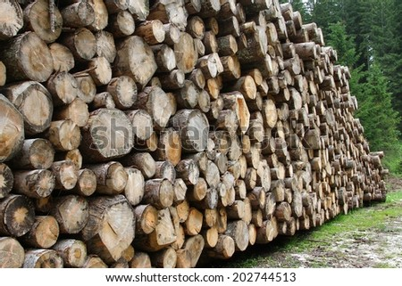 many logs cut by loggers in the mountains for the furniture industry 2