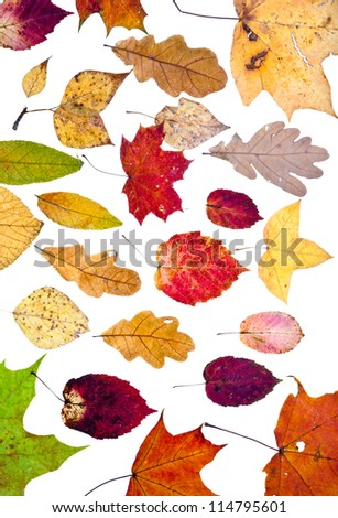 many loose autumn leaves isolated on white background - stock photo