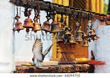Many metal sacrificial bells hanging on chain and landing dove, Pokhara, Nepal