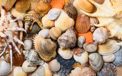 Many multi-colored shells of different shapes. Background on the marine theme. Studio photography. Focusing in the center of the frame.